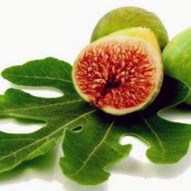 Smokva – Ficus carica  sadnica
