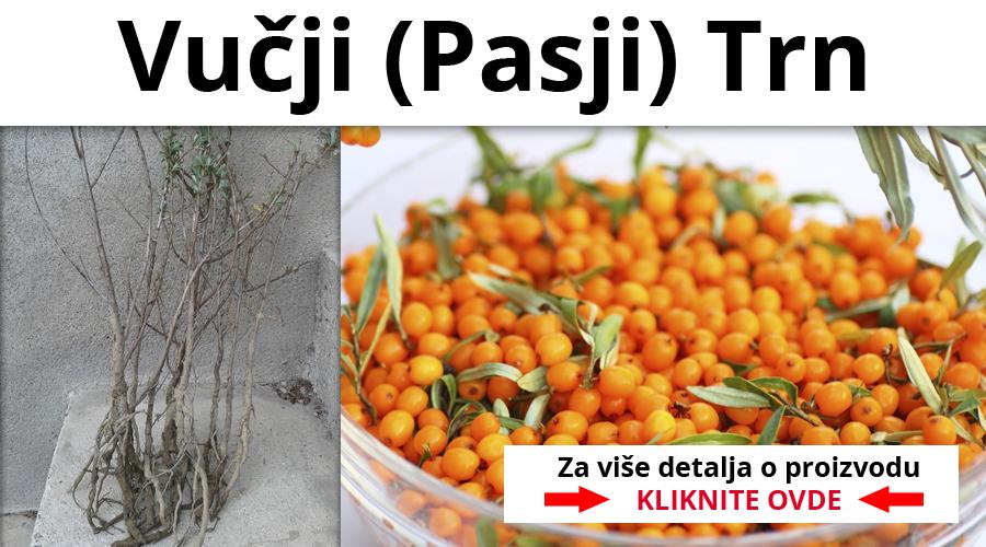 vucji-pasji-trn-sadnice-beograd-novi-sad